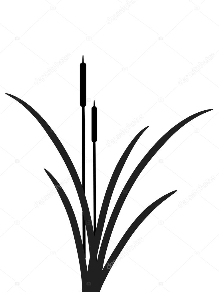 Reed clipart black and white — sarininka illustration #2421671 Vector