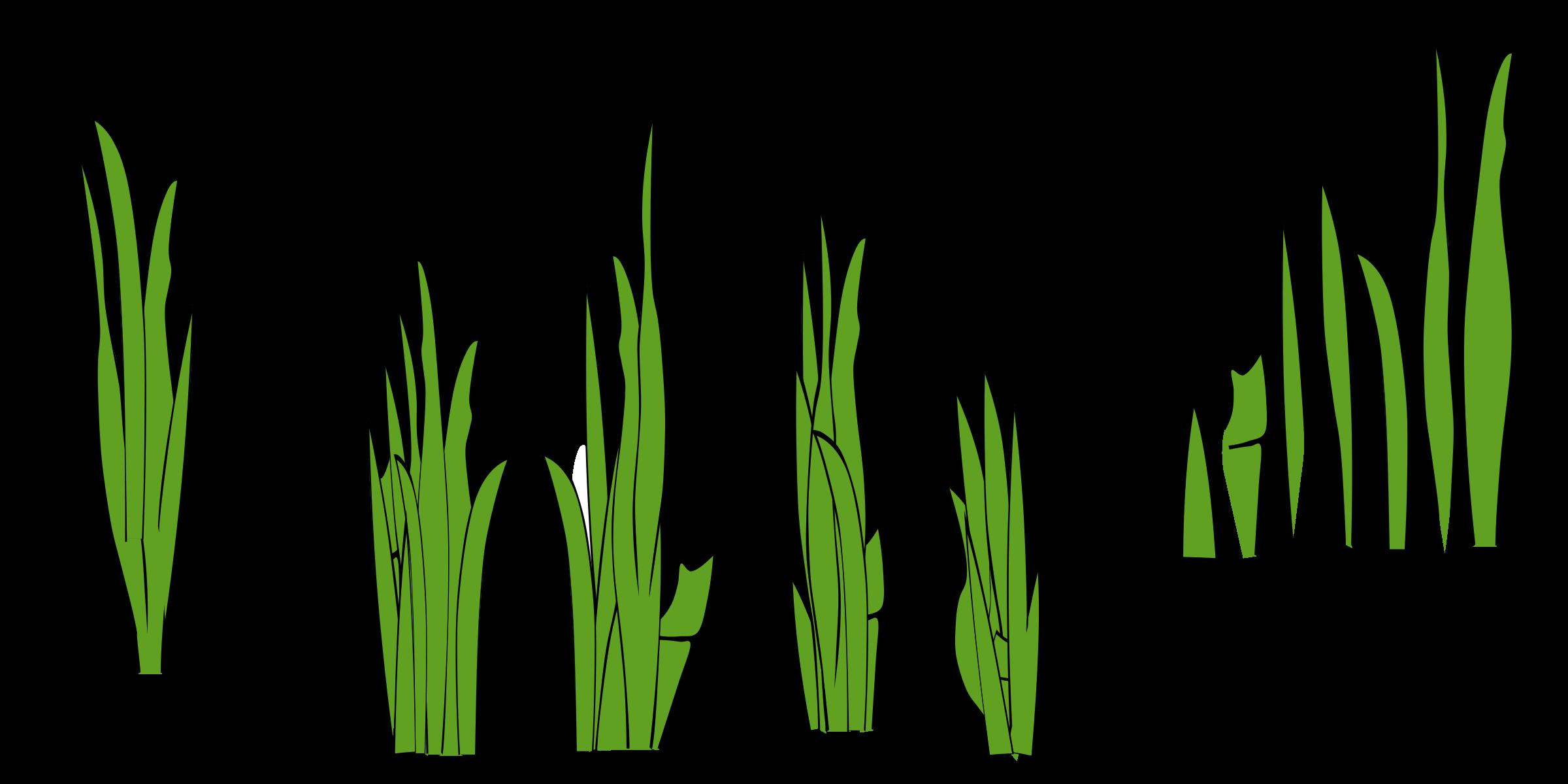 Blade clipart seagrass – Clipart Clip Reed Clip