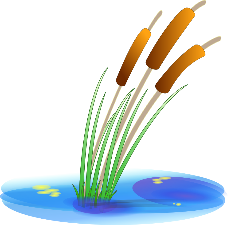 Reed clipart cattail Gold cattails Cattail Dividers Art