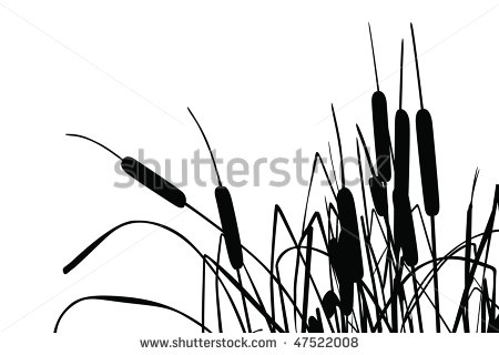 Reed clipart cattail White Cattails Cattail and Art