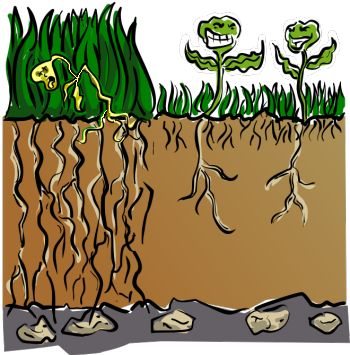 Reed clipart lawn maintenance Lawn care extensive/detailed Pinterest has
