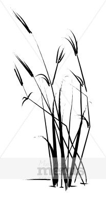 Reed clipart marsh grass Art and white Grass (54+)