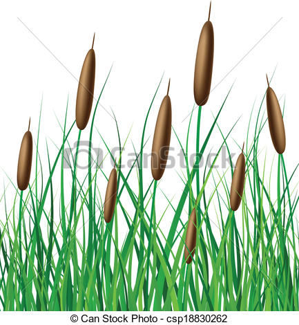 Reed clipart marsh grass Clip Vector  reed grass
