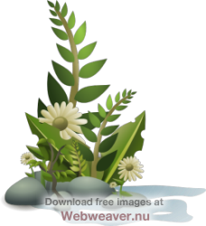 Reed clipart pond plant Clip Art Pond – Reeds