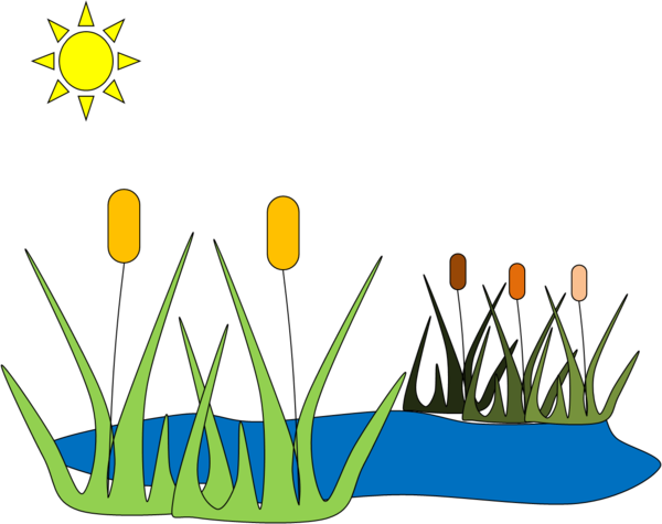 Reed clipart pond plant Clipart Images reed%20clipart Free 20clipart