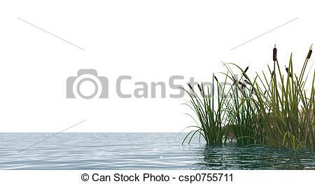 Reed clipart pond reed Reed%20clipart Clipart Clipart Panda Clipart