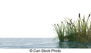 Reed clipart pond scene And pictures Swamp royalty