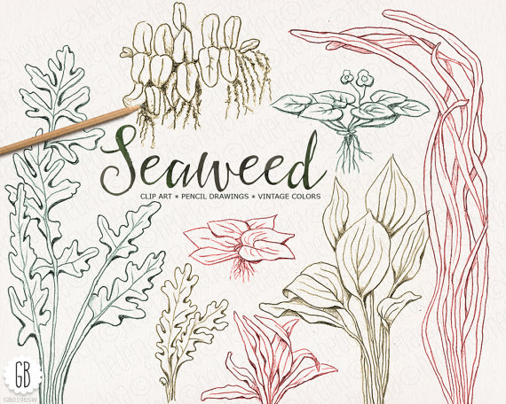 Drawn seaweed seagrass Sea  handdrawn colors drawing