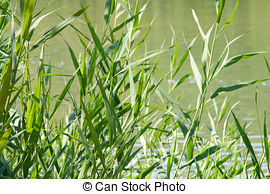 Reed clipart stems Stems stems; Common stems stand