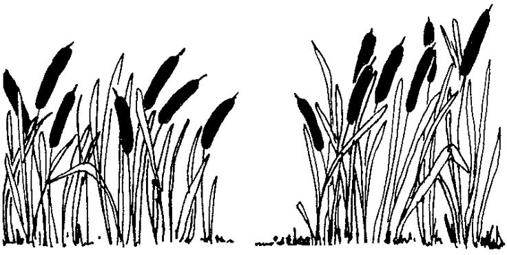 Reed clipart swamp Plants Clip Art Clipart Download