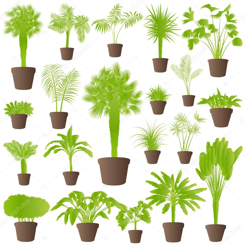 Reed clipart tree grass Grass tree grass plants vect