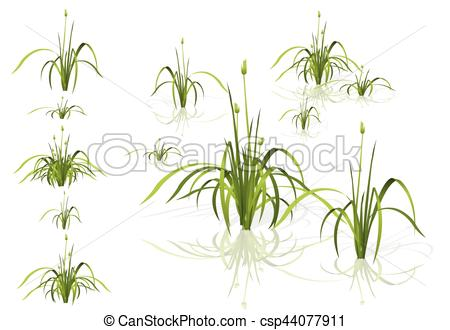Reed clipart vector Isolated Vector in with Clip
