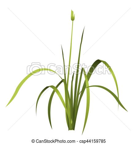 Reed clipart vector Isolated Vector variants with of