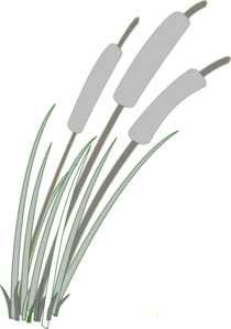 Reed clipart vector Art Clip vector online Clker