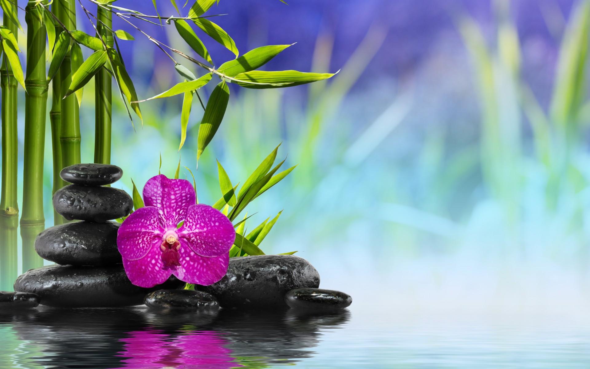 Reflection clipart island flower #5