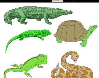 Reptile clipart #11