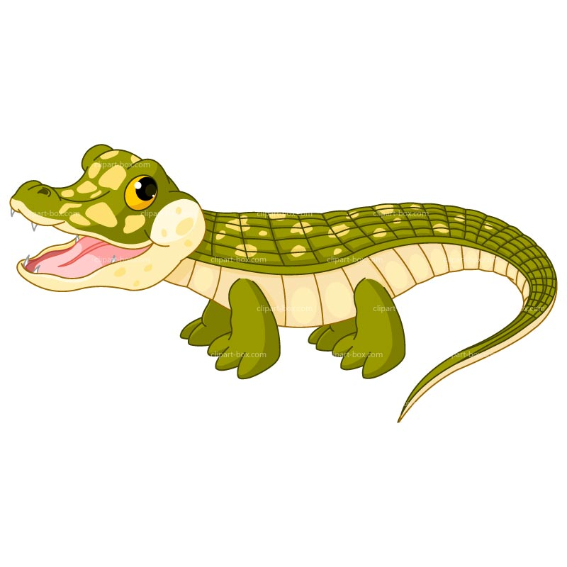 Reptile clipart baby alligator #7