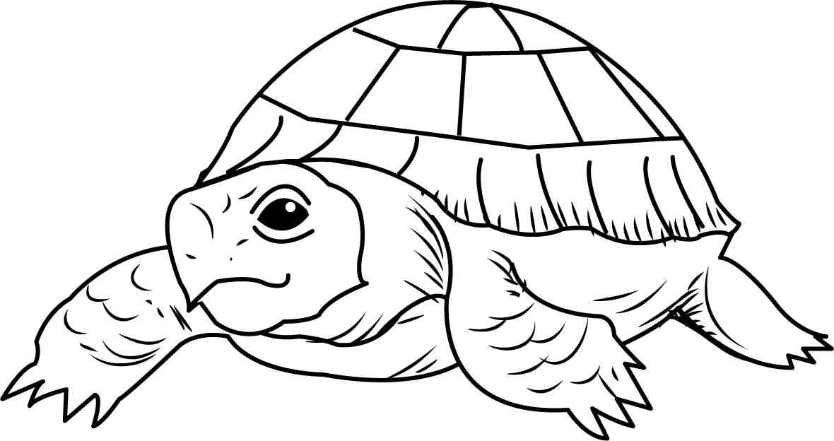 Tortoise clipart black and white #10