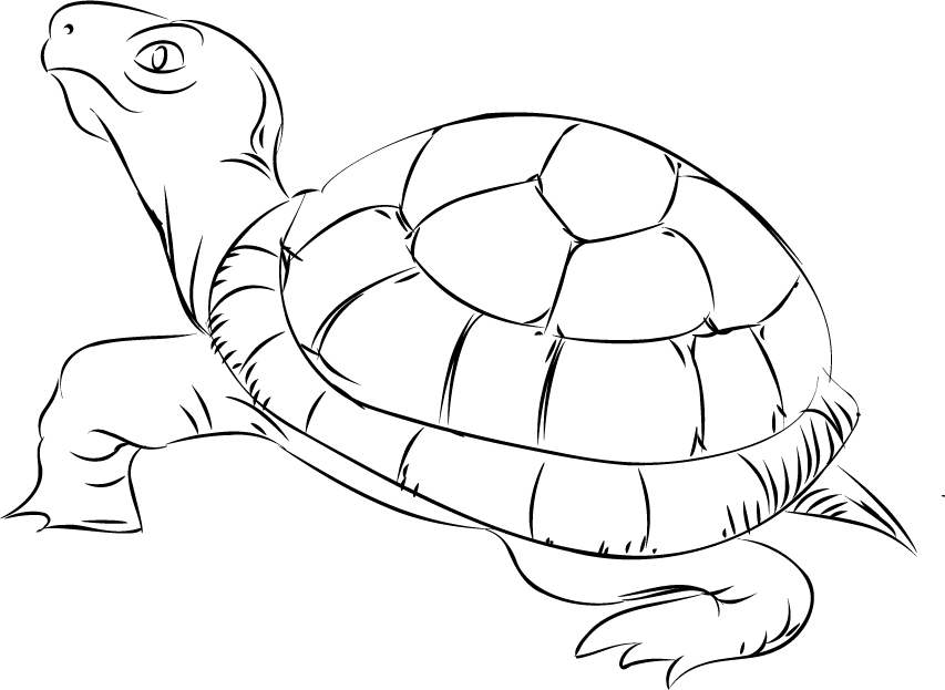 Tortoise clipart black and white #5