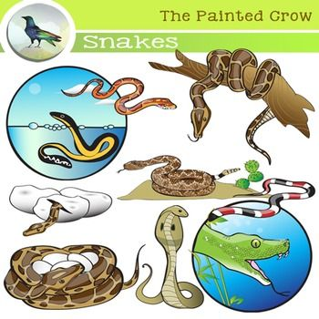 Reptile clipart life sciences #3
