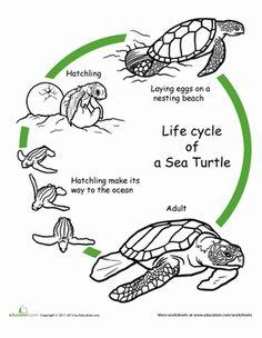 Reptile clipart life sciences #5