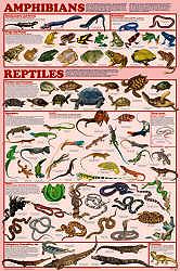 Reptile clipart life sciences #7