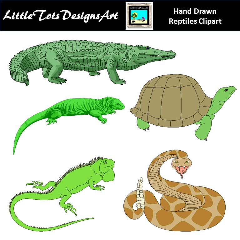 Reptile clipart little animal #13