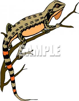 Reptile clipart newt #15