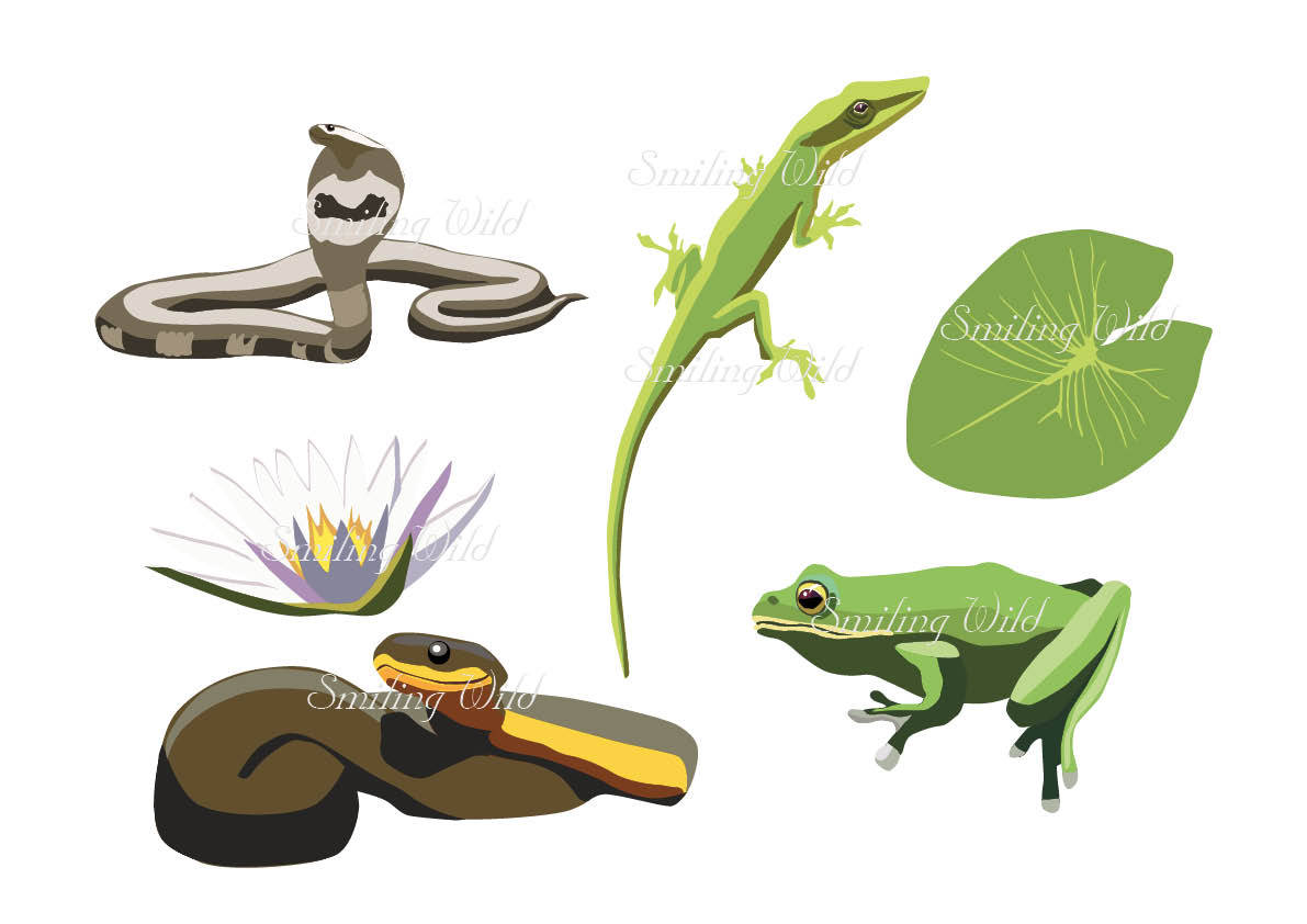 Reptile clipart tree frog #7