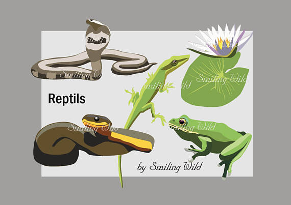 Reptile clipart tree frog #5