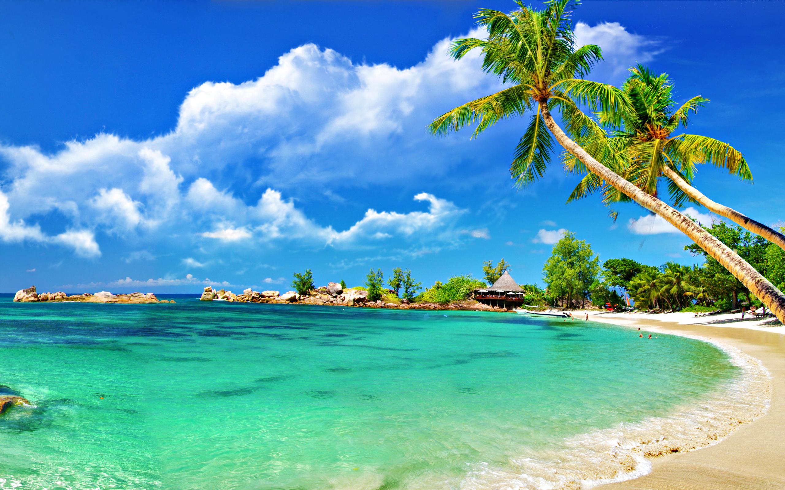 Wallpaper clipart tropical Beach Beach Clipart  Tropical