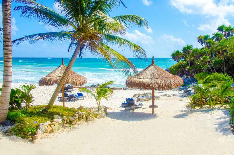 Resort clipart clean beach Org setting Playa trees •
