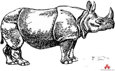 Rhino clipart african animal #11