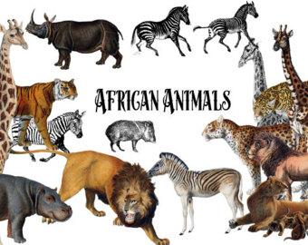 Rhino clipart african animal #5