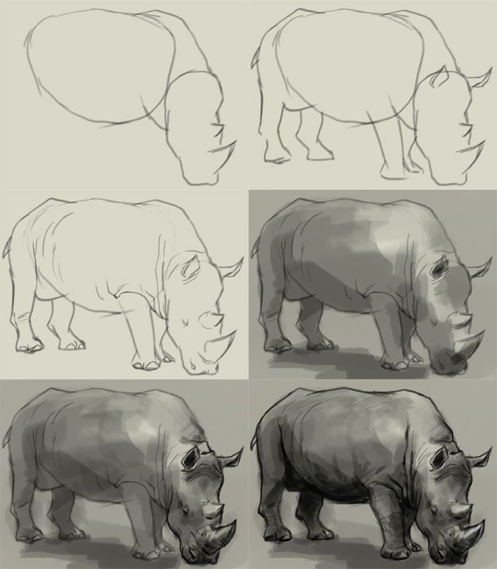 Drawn rhino pencil drawing Rhino step with to Rhino