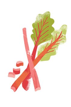 Rhubarb clipart Watercolor ideas Rhubarb tattoo ::