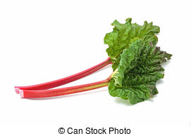 Rhubarb clipart Background on rhubarb isolated Early