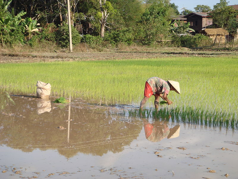 Rice clipart subsistence farming Subsistence Find Pinterest more on