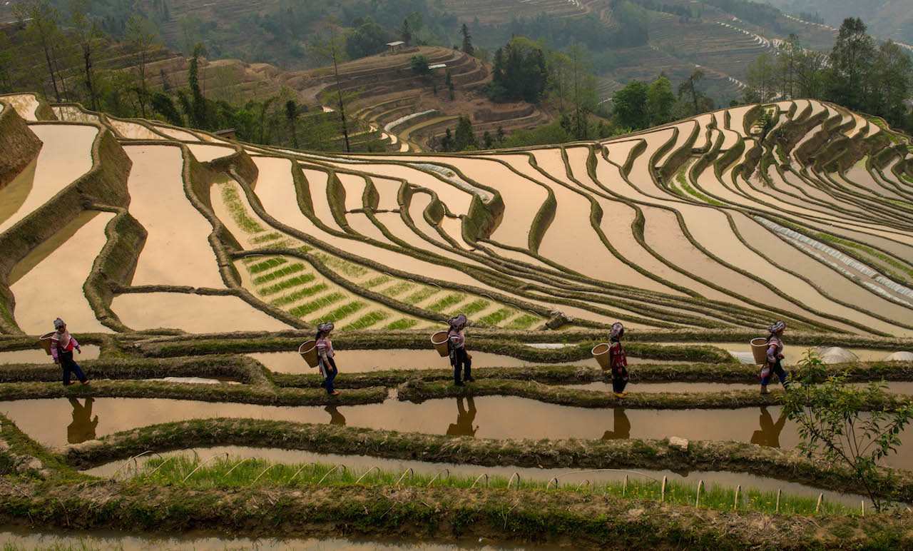 Rice clipart subsistence farming Bodies origin For specifics Agriculture