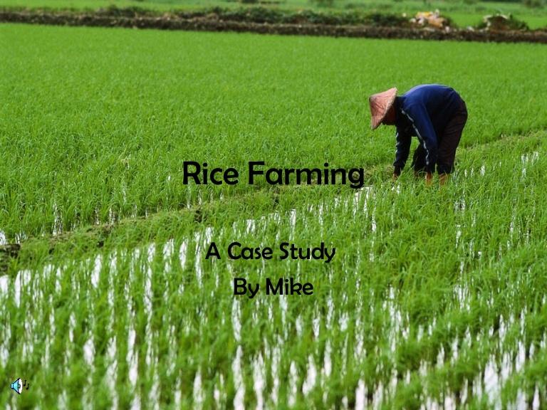Rice clipart subsistence farming  Farming2 Rice