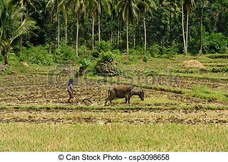 Rice clipart subsistence farming Primitive primitive Southeast Pictures farming