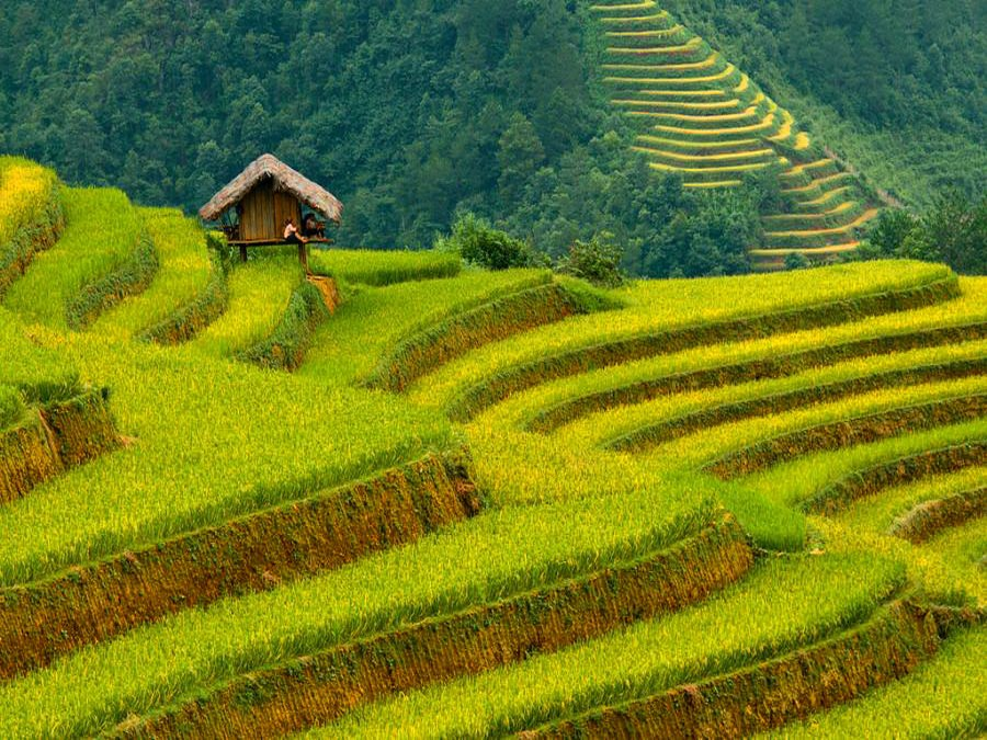 Rice Terrace clipart rice field Best terraces Pinterest ideas Banaue