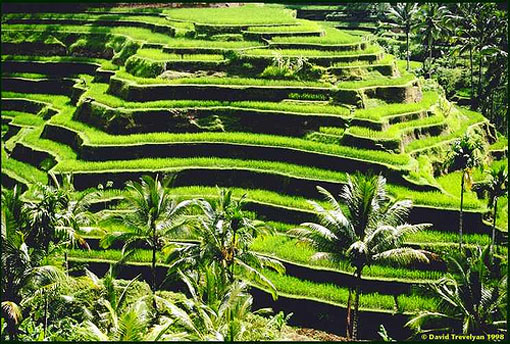 Rice Terrace clipart japanese rice The Of The Hidden Wonders
