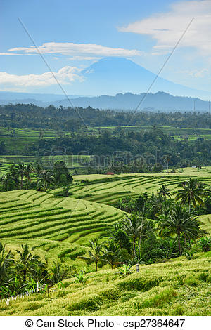 Rice Terrace clipart agriculture field #9
