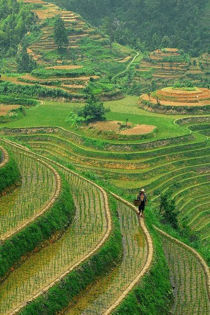 Rice Terrace clipart In Rice Terraces View Aerial