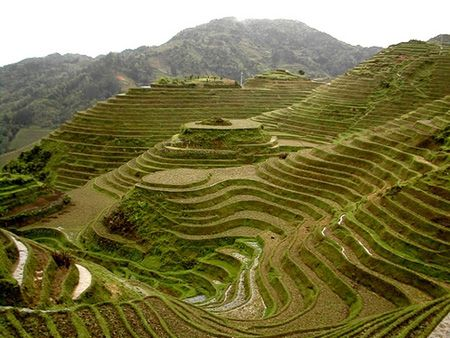 Rice Terrace clipart The 25+ Banaue on best