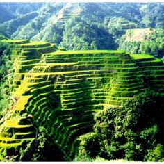 Rice Terrace clipart baguio #13