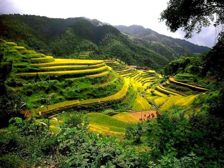 Rice Terrace clipart baguio #15