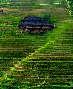 Rice Terrace clipart Actually Rice To either Banaue