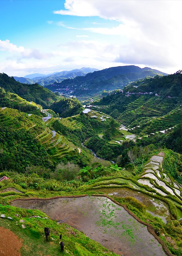 Rice Terrace clipart Discover Rice terraces Philippines Best
